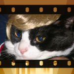 Wordless Wednesday-Kitty Trump Comb Over?
