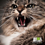Animal Planet's My Cat From Hell – Sponsored Video