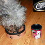 Cesar Meaty Selects – Food For Small Dogs