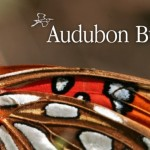 FREE Audubon Butterflies – A Field Guide to North American Butterflies (Today Only)