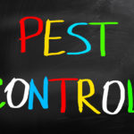 Avoiding Infestations in Your Home: Modern DIY Pest Control Methods