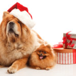Don't Forget Fido During the Holidays-Bil-Jac Dessert Jacs!