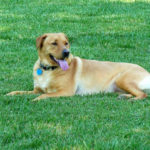 Ways to Reduce Damage That Dogs do to a Lawn