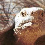STOP BP From Burning Endangered Sea Turtles!