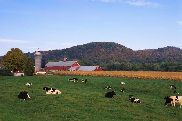 Stonyfield Farm- Help Grant A Farmer's Wish – Vote now, and receive coupons!