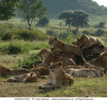 Disneynature AFRICAN CATS Review!