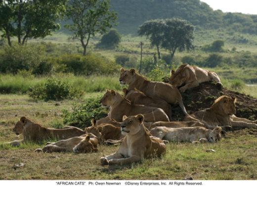 AfricanCats_Photo_01