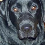 Dog Bark For Fido- Holiday Treat!