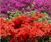 Free Admission to Botanical Gardens – May 11th Only!