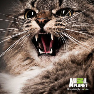 Animal Planet's My Cat From Hell