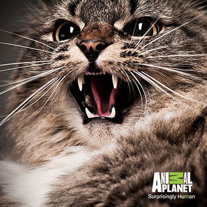 Animal Planet Cat From Hell Tips