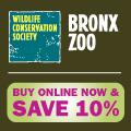 10% of Bronx Zoo