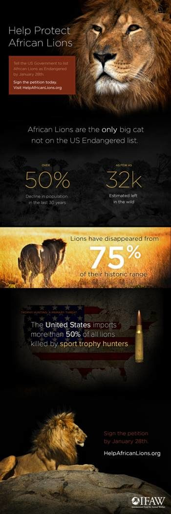 African Lions In Danger Of Extinction- Save The Lions!
