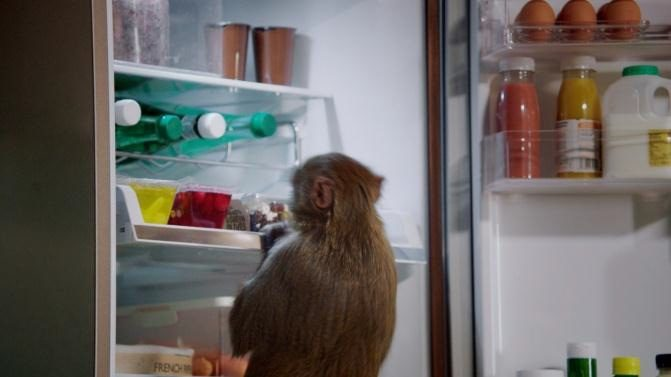 Sponsored Video Samsung Refrigerator Monkey Thief #spon