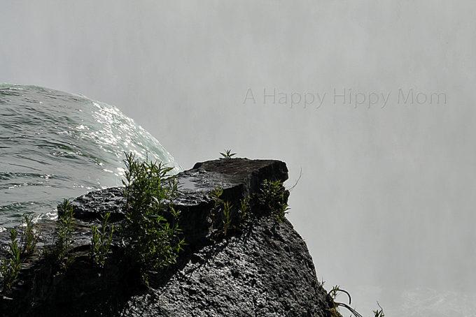 Photos From Niagara Falls State Park