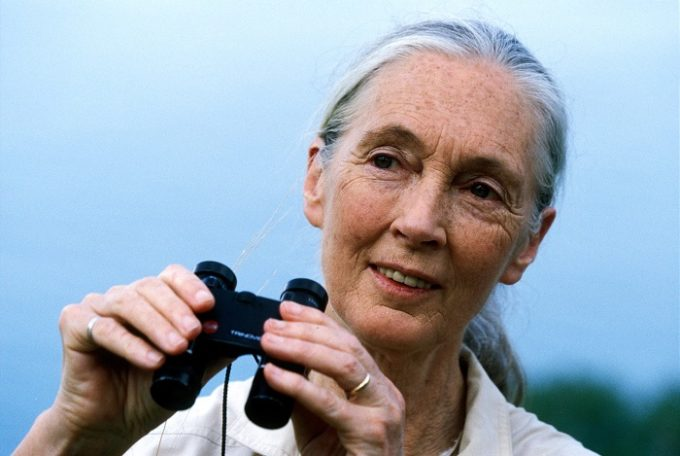 Jane Goodall Launches Herbal Medicine on Pozible