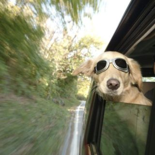 Driving With Pets in the Car