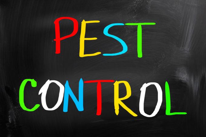 Avoiding Infestations in Your Home: Modern DIY Pest Control Methods