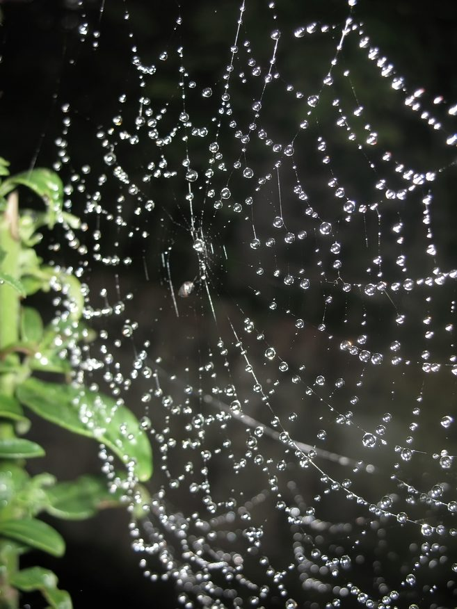 More Than Cobwebs: Top Tips for Keeping Spiders Out of Your Home