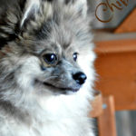 Pet Travel – OKBUYNOW Extendable Pet Carrier Review