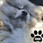 #1 Customer-rated-Healthy Paws Pet Insurance®& Giveaway
