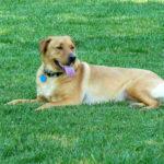 dog-on-lawn