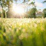 dew-on-grass