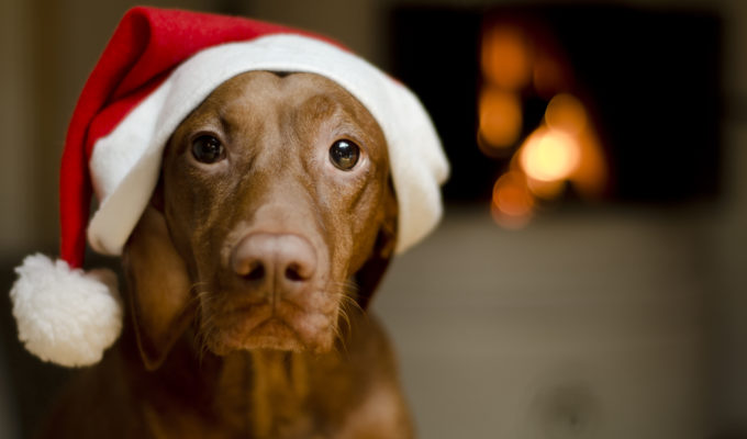 Top 5 Innovative Pet Gifts for the Holidays!