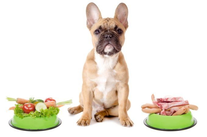 frenchbulldog-raw food