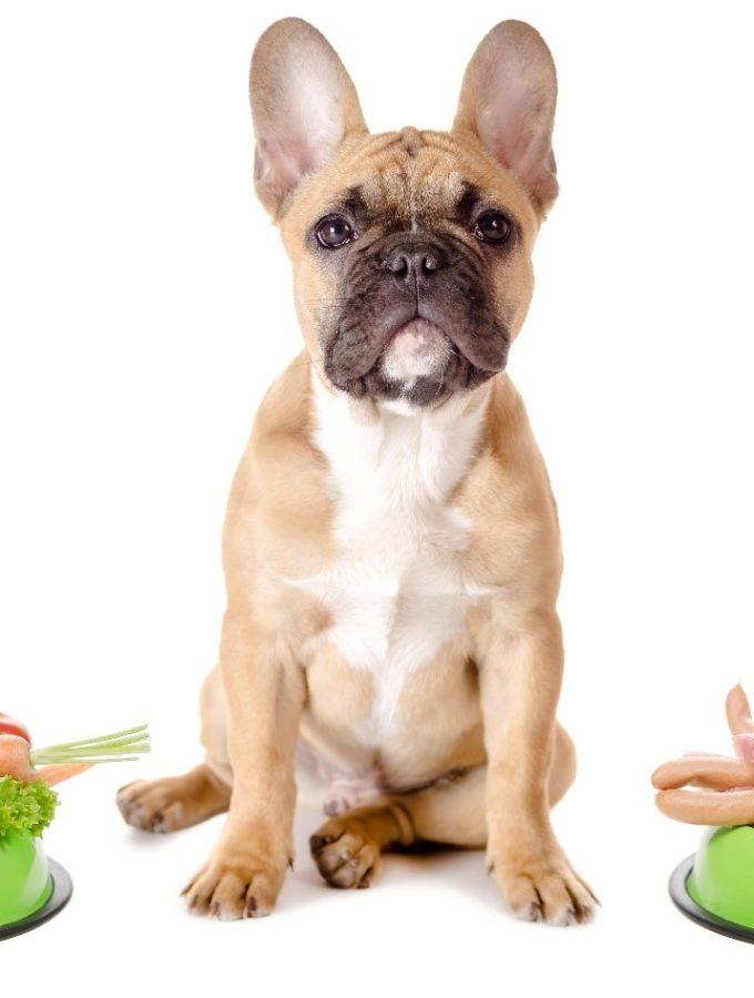 frenchbulldog-raw food