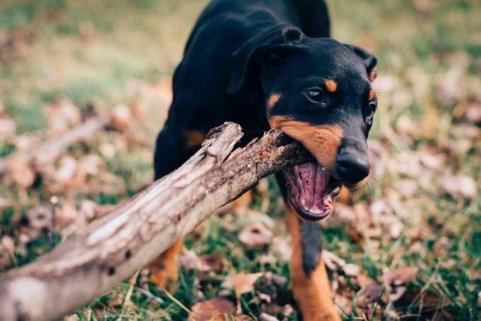 3 Simple Ways To Help Your Dog Go From Bone Idle to Bone To Run